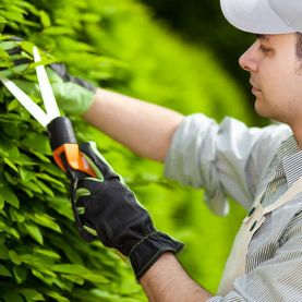 работа в Чехии для садовников