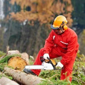 Легальное трудоустройство в Канаде для лесных разнорабочих